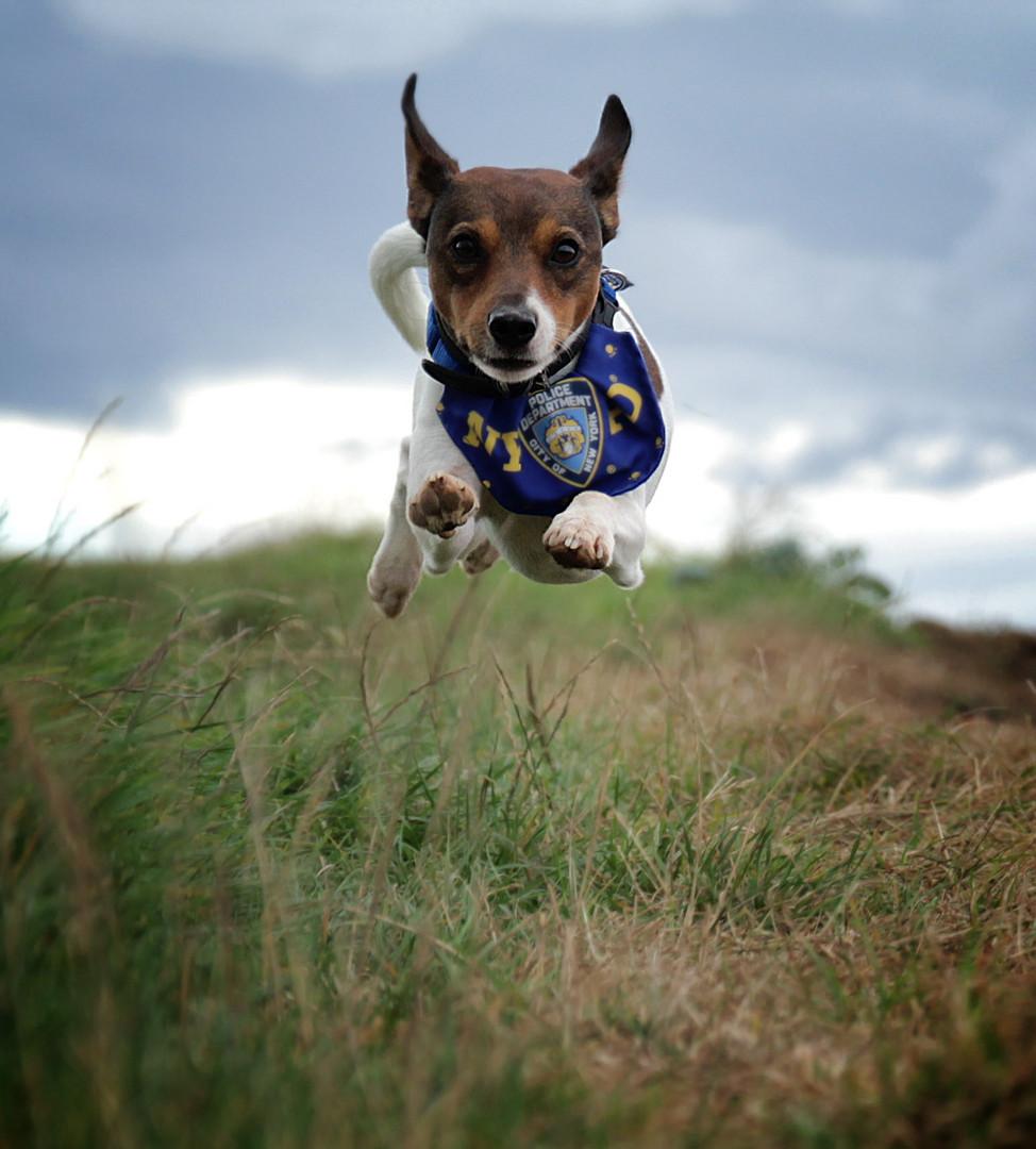 Flying Jackson