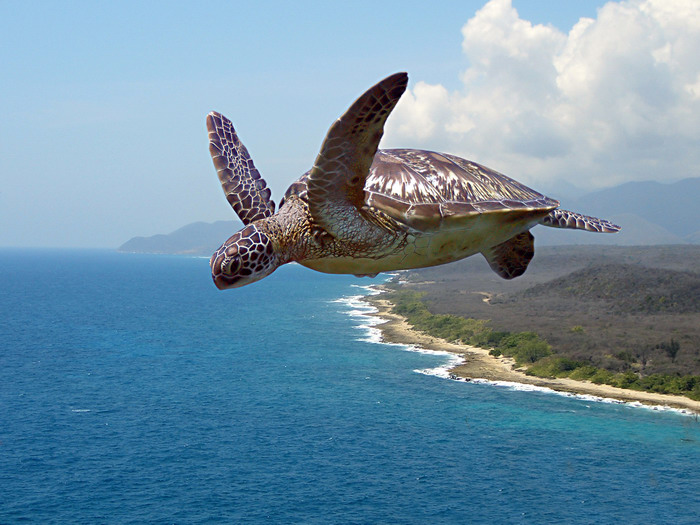 Flying over the turtle's nest