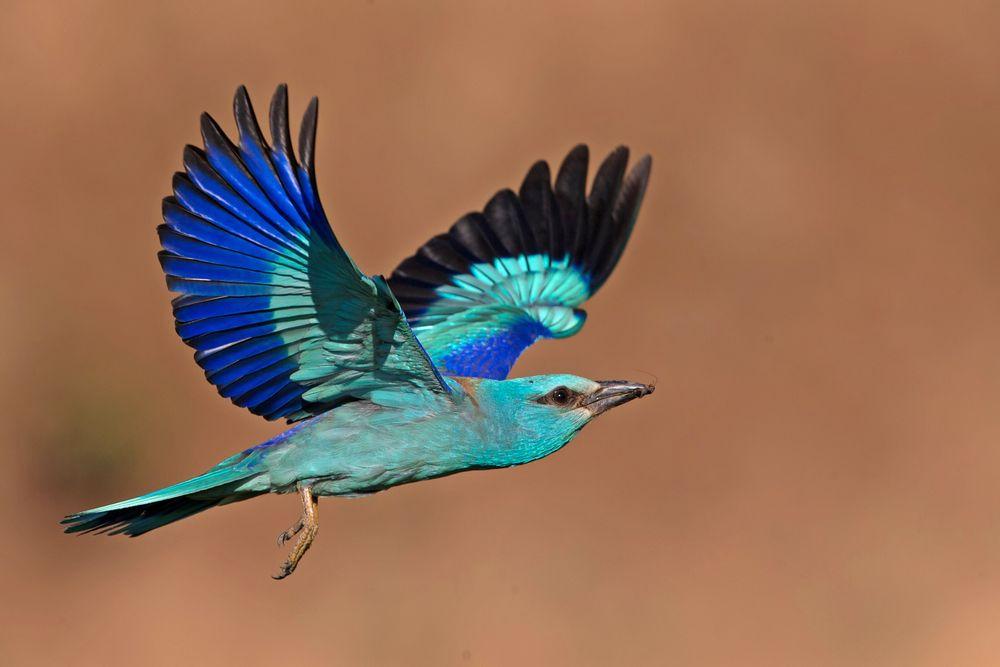 flying roler 4