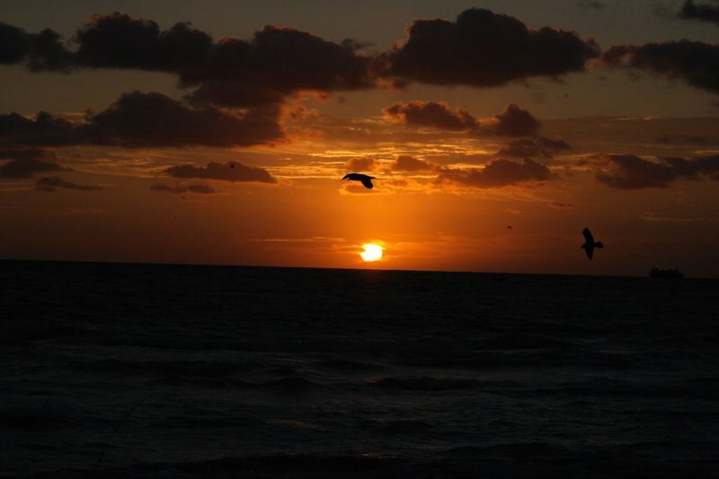 Flying to the sun - Miami Dez 2006