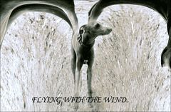 FLYING WITH THE WIND