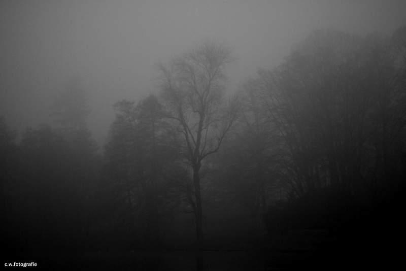 .....Fog.....