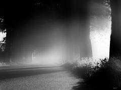 ~ fog ~