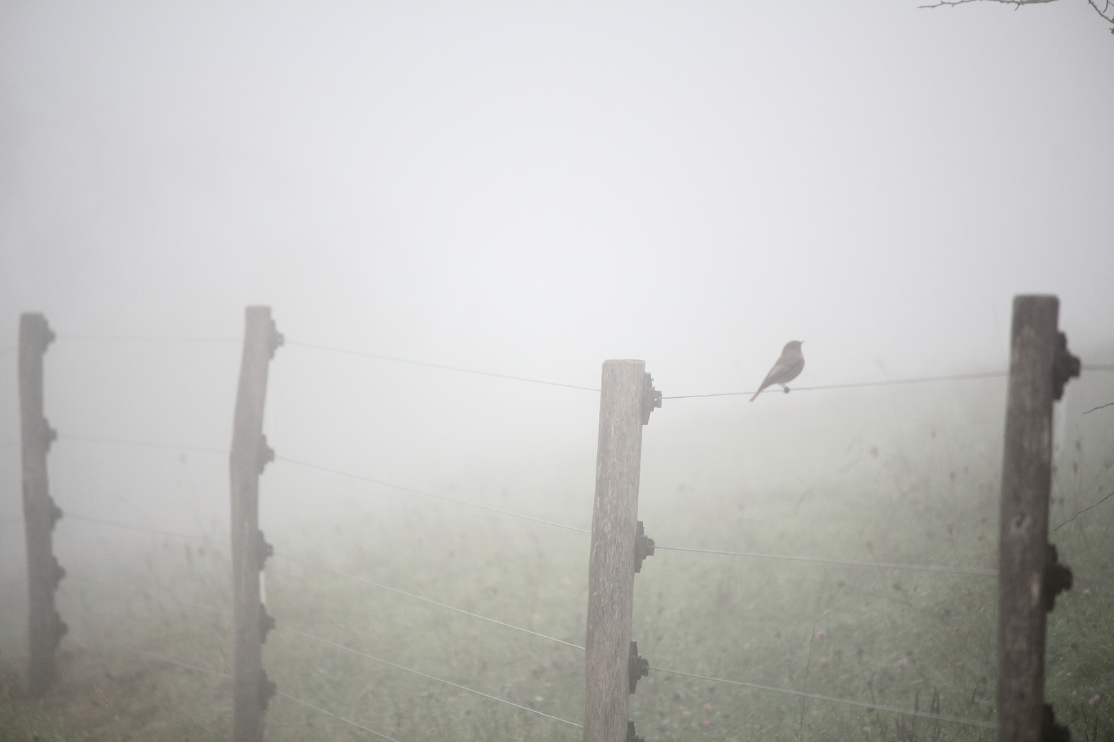 Fog Bird