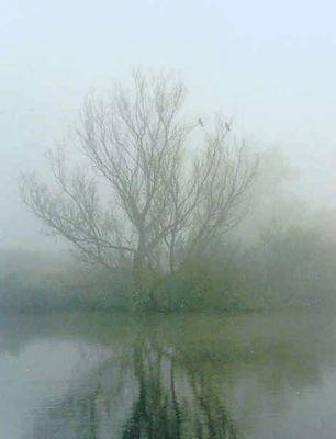 Fog near Amsterdam