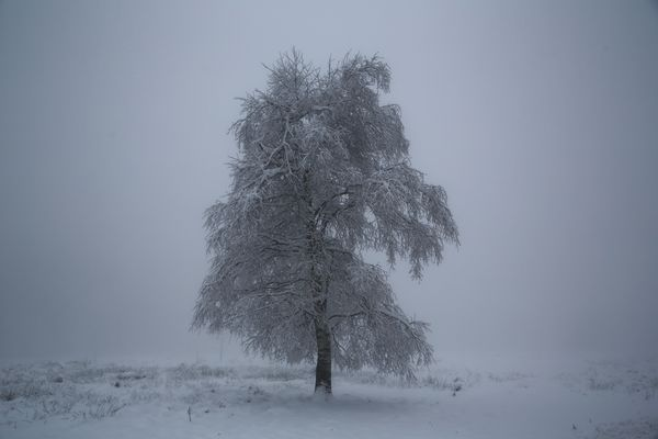 ...Fog, Snow and a lonely tree...