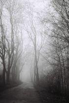 fog surrounds us