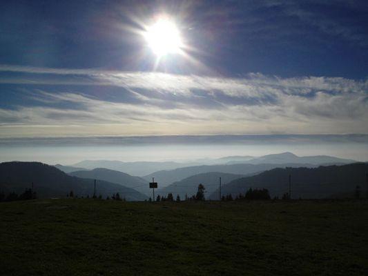 Foggy Black Forest