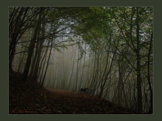foggy forest in october..