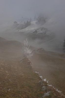 Foggy Frost