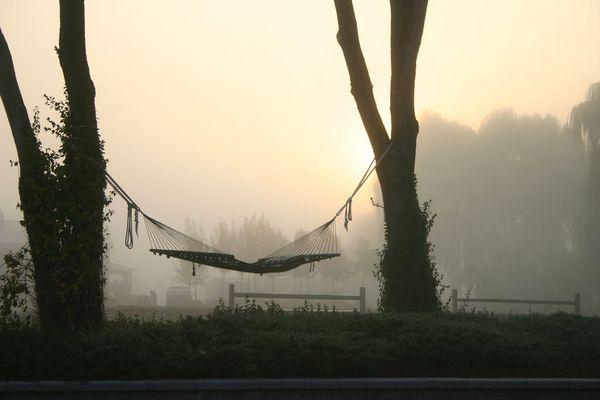foggy hammock
