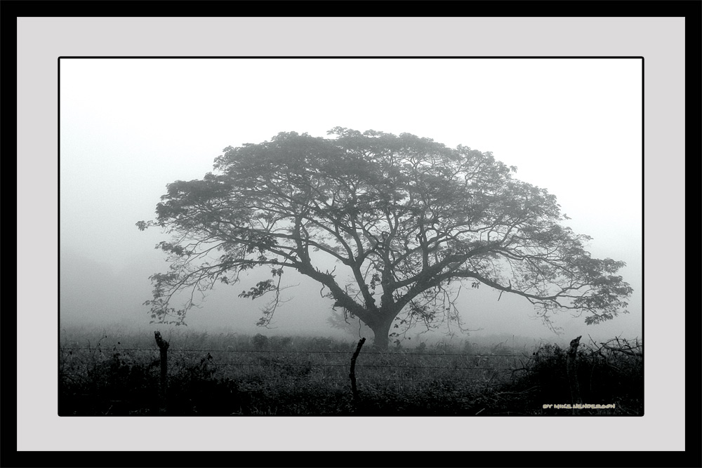 Foggy Honduran Morning #2