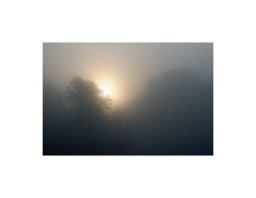 foggy III