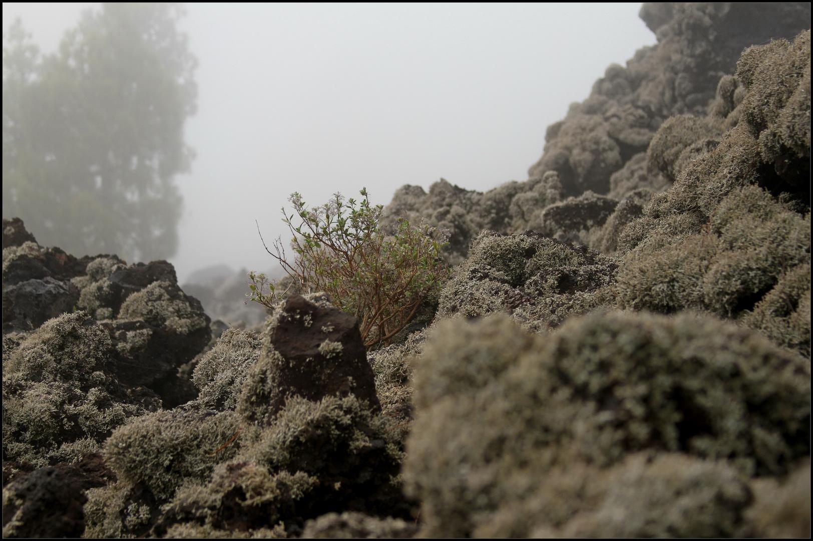 Foggy Lava Landscape