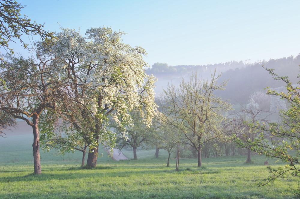 foggy mornings (7)