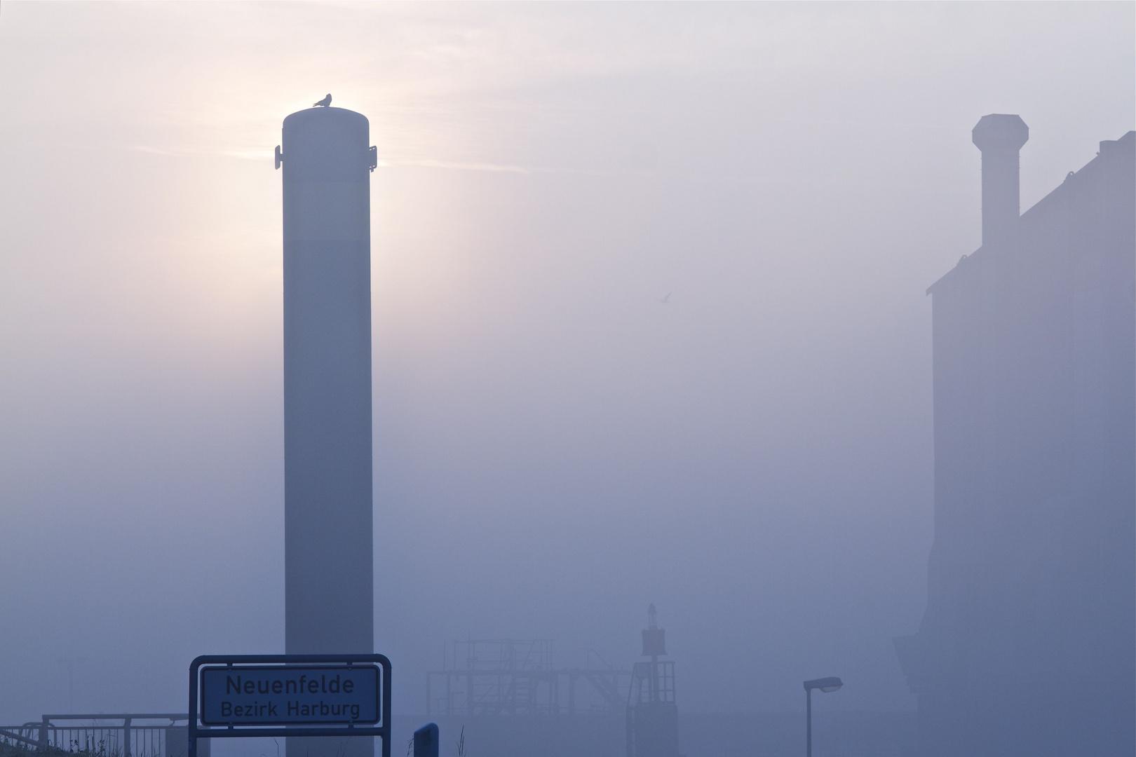 foggy sunday morning