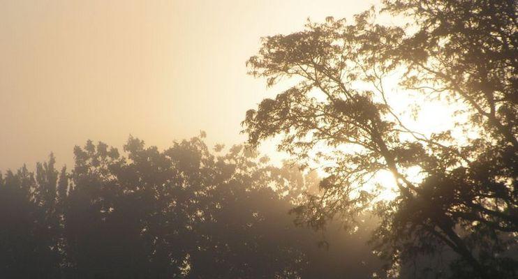 Foggy Sunrise in Oklahoma