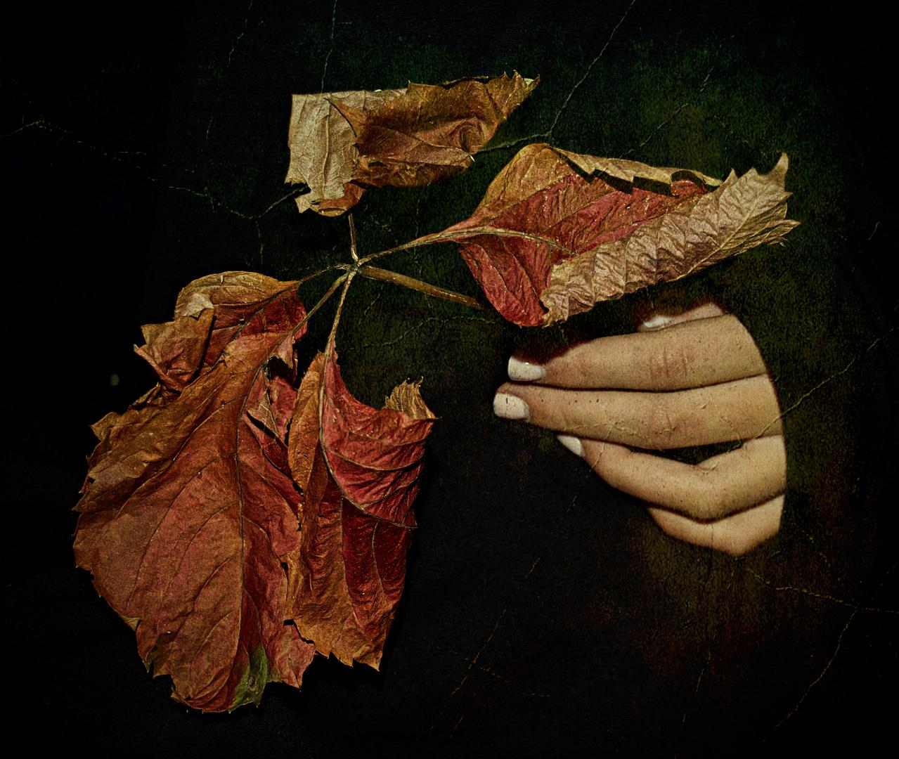 foglie al posto dei fiori