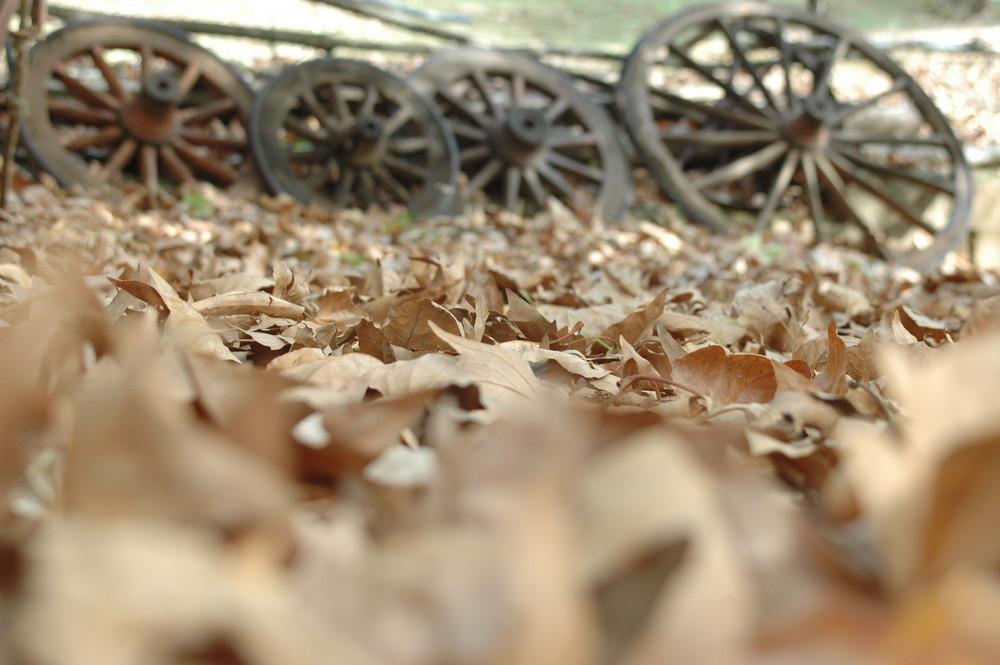 foglie e ruote