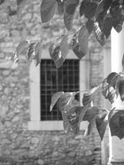 foglie libere...