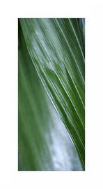 foglio verde