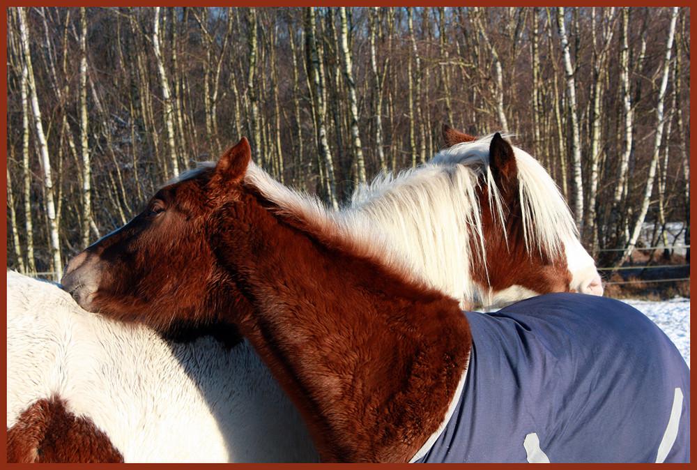 Fohlenfreundschaft