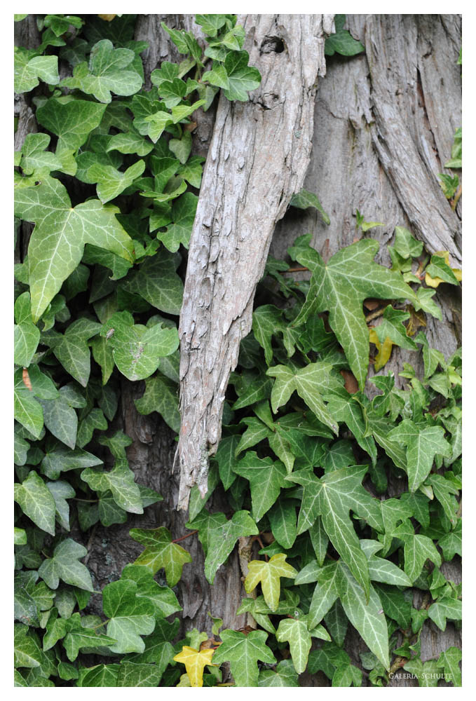 FOL Hamm 2009 - 03 - Mein Freund, der alte Baum