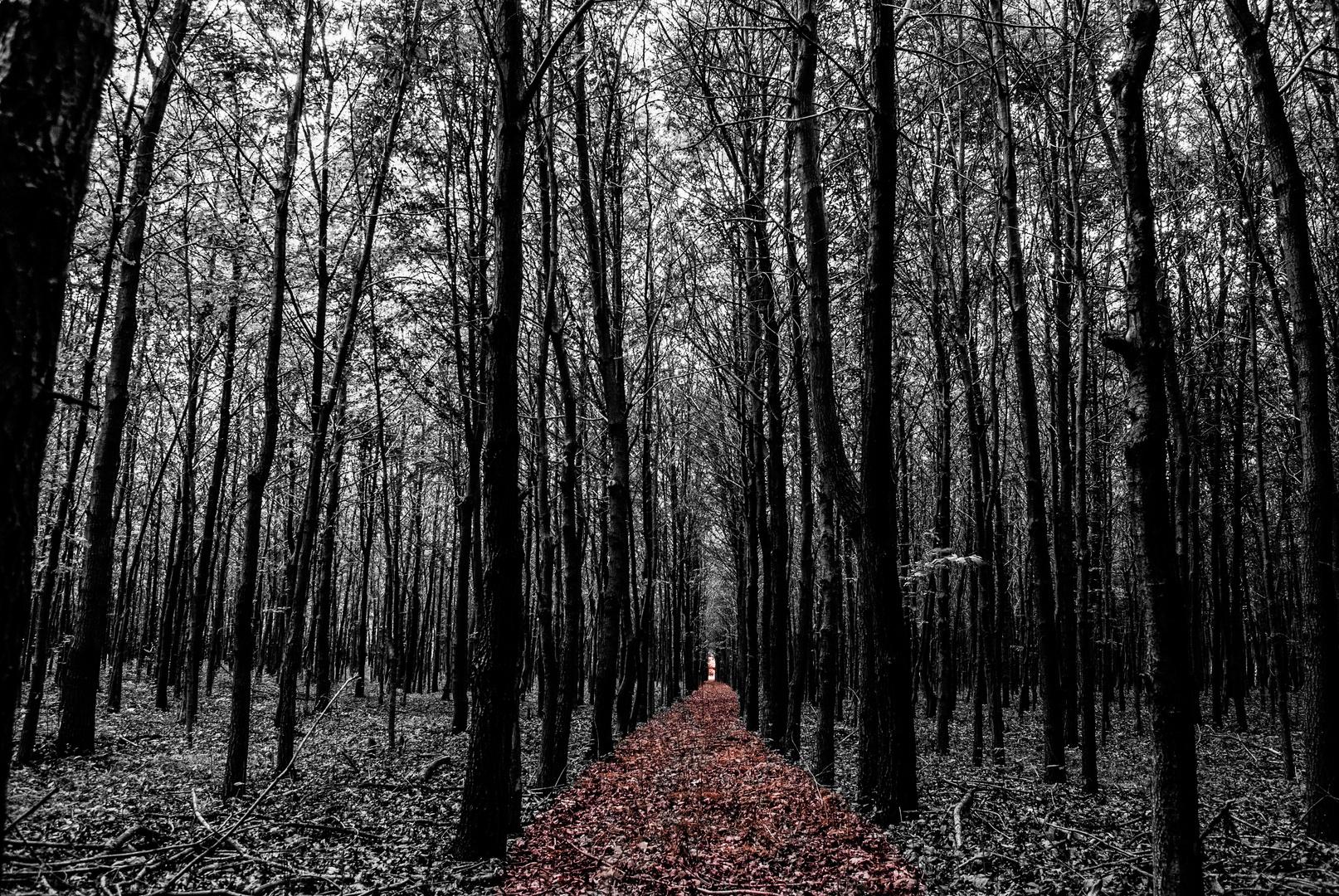 Folge dem Weg
