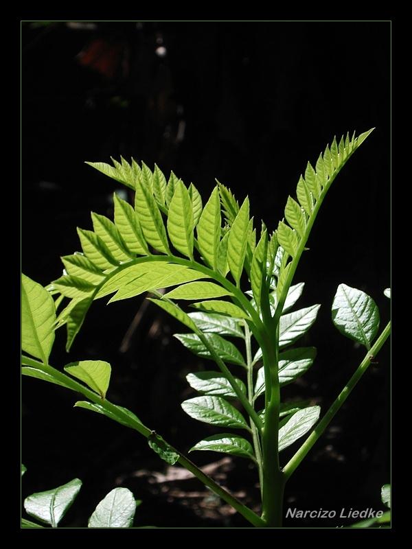 Folhas, luzes e sombras I