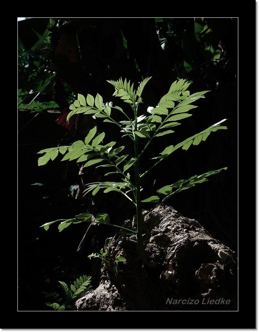 Folhas, luzes e sombras II