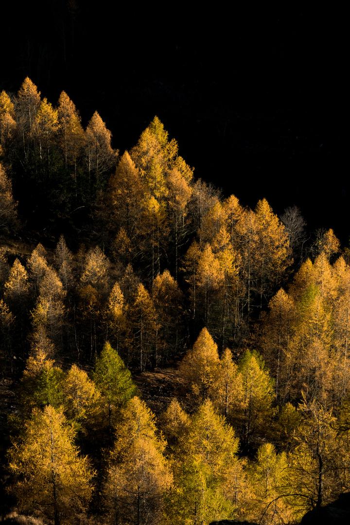 foliage di  novembre