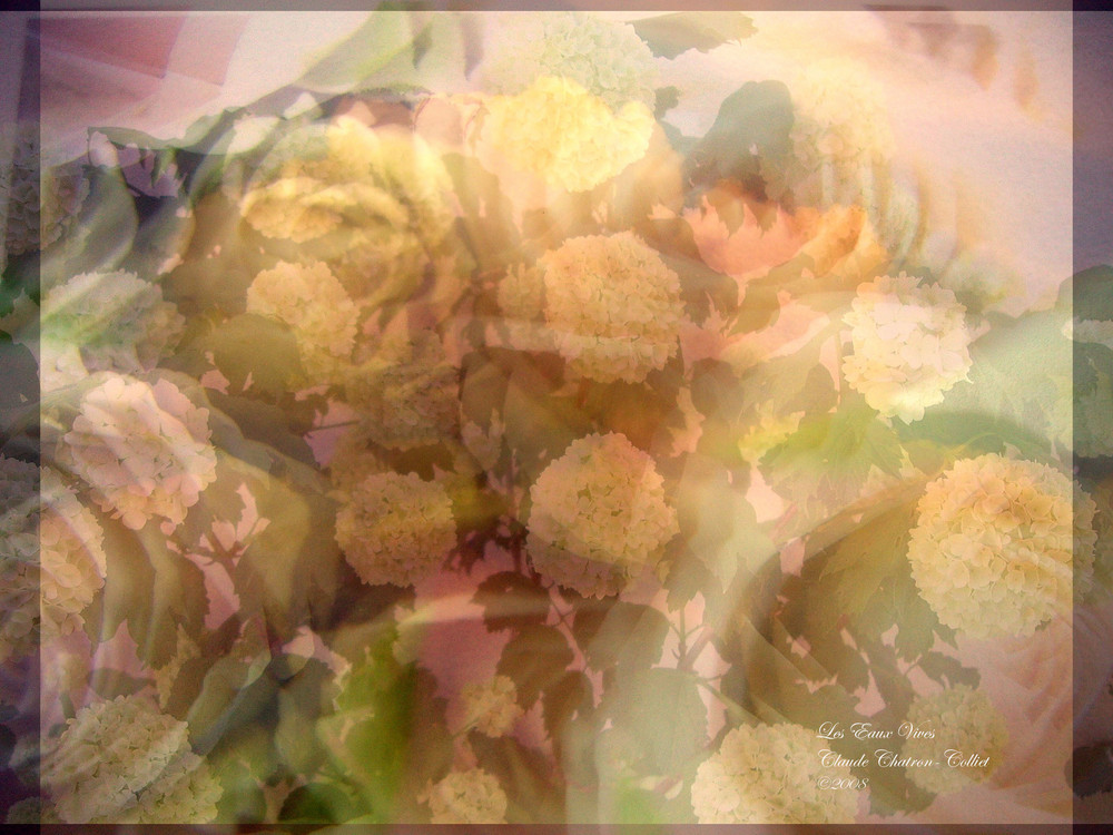 Fondus de roses