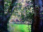 Fontaine-de-Vaucluse (2) Tableau d'automne