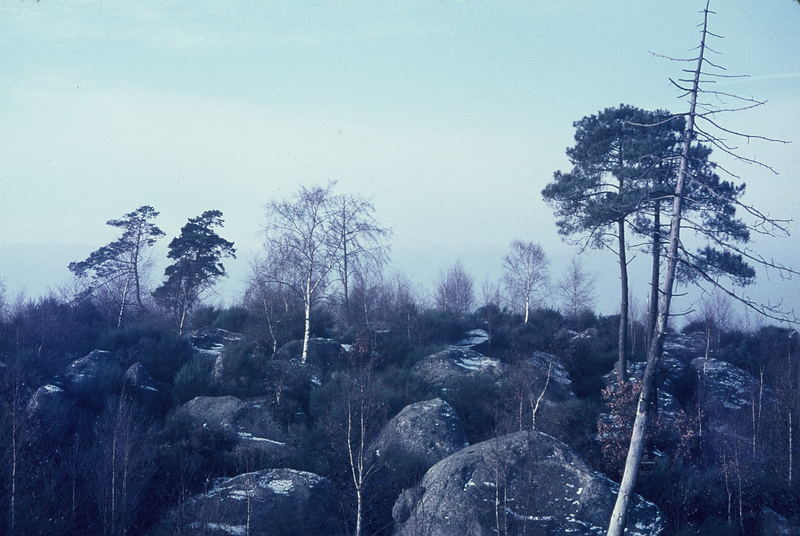 Fontainebleau im Winter
