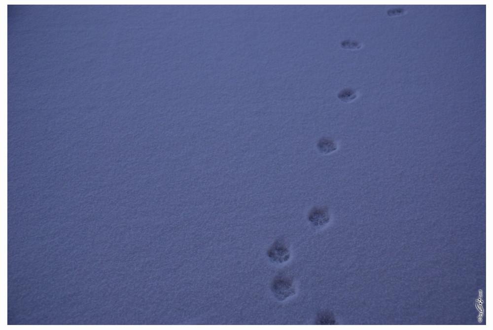 [ footsteps ]