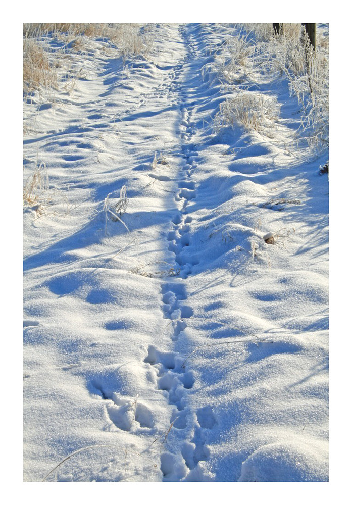 Footsteps...I can see footsteps in the snow