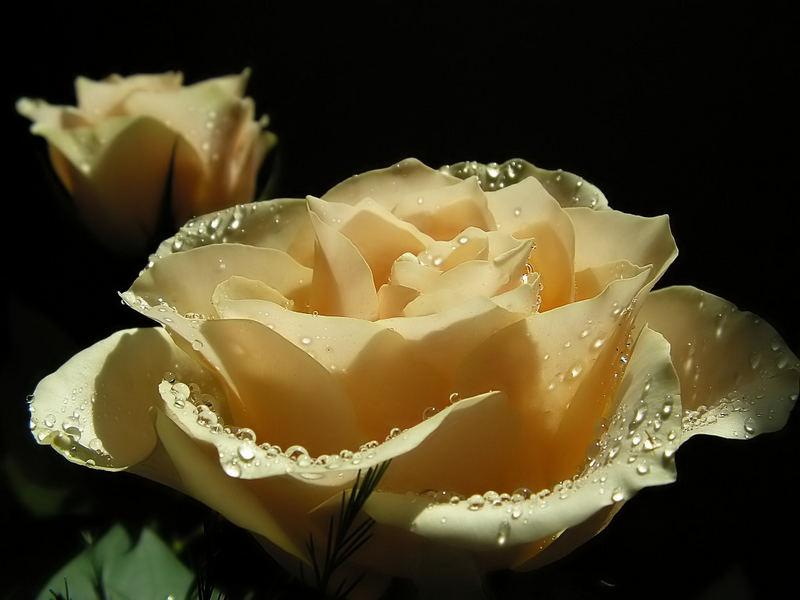 For a dear friend