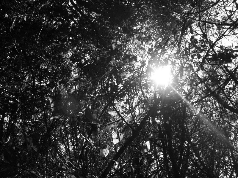 forbiddenforest
