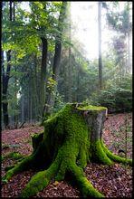 Forest (Battle #4)
