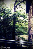 Forest in Weinheim-Germany