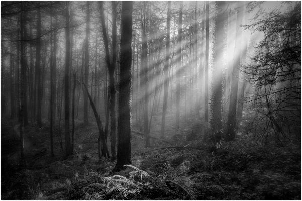 Forest Light One