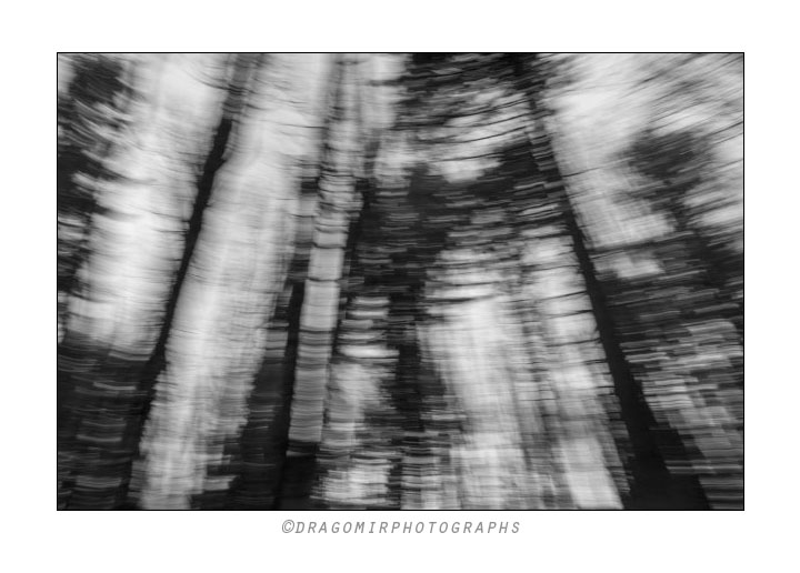 Forest Motion One 2