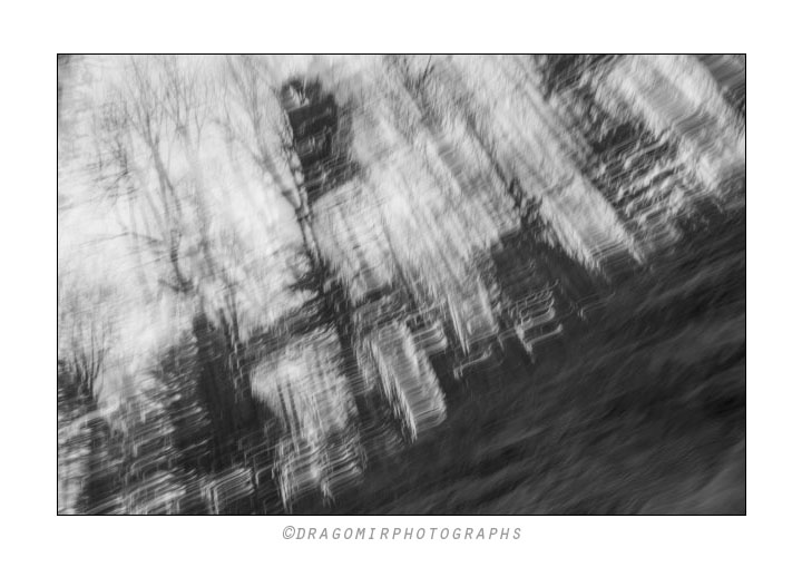 Forest Motion One 5