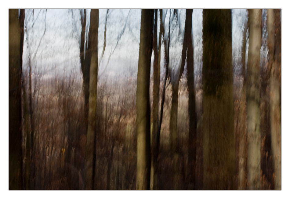 Forest Wusch (II)