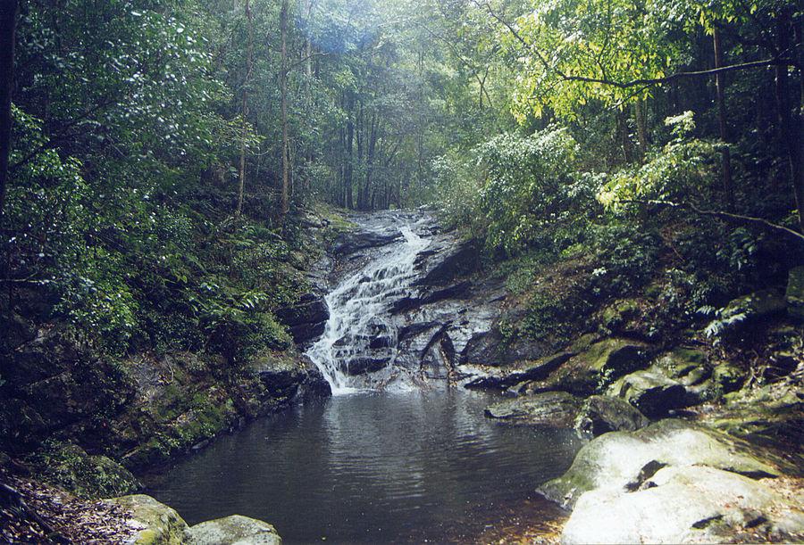 Foresta fluviale