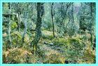 Foret de Fontainebleau