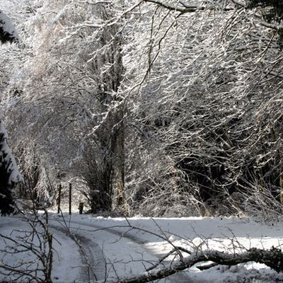foret suisse 3 , hiver, 1er janv. 09