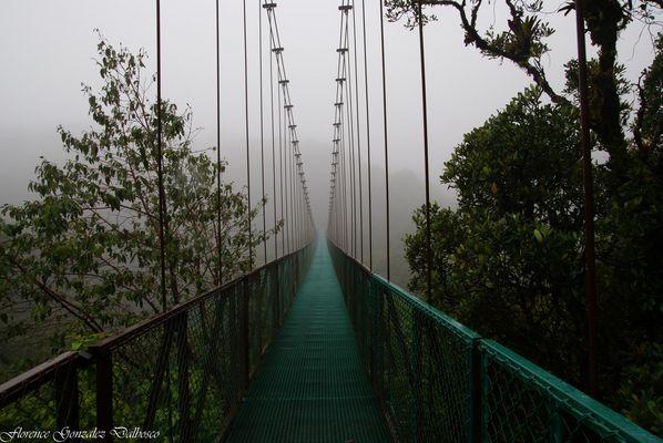 Foret tropicale de Monteverde 1 Costa Rica-03374