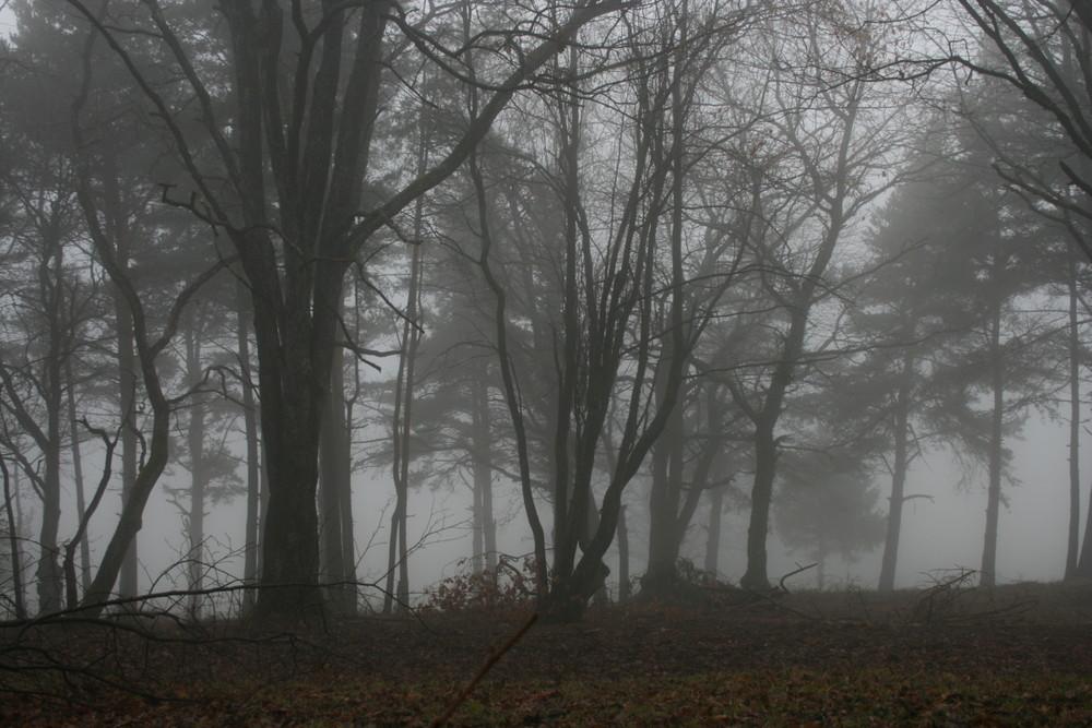 Forets dans la brume