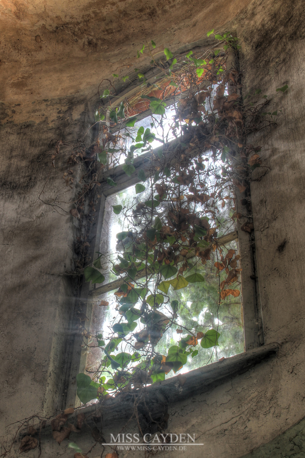 Forgotten Window